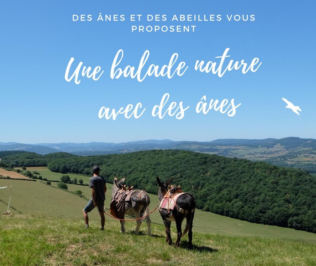 ânes et randonnées près de Cluny